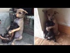 Even After Being Rescued, Two Abandoned Puppies Won't Stop Hugging Each ...