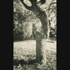 The old tree  #instarussia #instagramrussia #instapic #picoftheday #pictureoftheday #bestoftheday #photooftheday #picture #photography #pic #sonyxperia #sonymobile #bnw_planet #bnwmood #blackandwhite #blancoynegro #bnw_lover #blacknwhite_perfection #black #bnw_globe #bw #bw_crew #bw_perfect #allblackcommunity #bnw #чб #чбфото #чернобелое #blackwhite