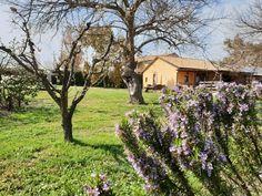 Primavera incantatrice 😍💝🌹🥀🌺  #agriturismolegrange #countryhouselegrange ❤