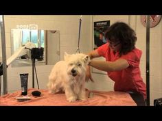 How to groom dog with wiry hair - dog grooming demonstration b7702dc5c
