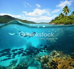 Stock Photo : Beautiful Coral reef with lots of fish and a woman