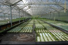 Want to see a great way to grow fish in a greenhouse? Check out Growing Power, which is affiliated with the University of Wisconsin. Here is a story about their Aquaponics program, and this is more about the program itself. Growing Power, Hydroponics System, Climate Change, Garden, Prawn, Farms, Fishing, Ideas, Garten