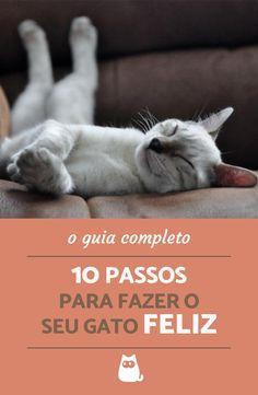 Essas são as dicas chave para um FELINO FELIZ! Não perca essas 10 dicas para ser o melhor tutor do mundo e melhorar a qualidade de vida do seu pet!  #gatos #felinos #animais #pets