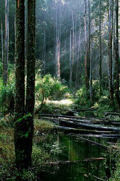Nantou #Taiwan 南投 忘憂森林