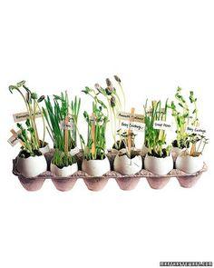 Eggshell Flowerpots How-to -- Great for teaching kids the basics of gardening,