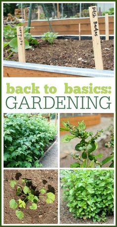 Back to Basics: Gardening. Learning all the basics of growing your own produce in these posts! We cover basic gardening skills, planting lists, watering tips, composting, and raised bed gardening instructions. #watergardens #gardeningbasics #raisedgardenbeds