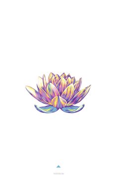 minimalistic design lotus flower in color