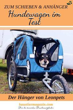 Ein Hänger zum schieben und radeln... wie gut ist der Hunde Anhänger von Leonpets im Test? Wir verraten es dir hier  #hunde #hundeanhänger #hundeliebe #alterhund #fahrradanhänger #leonpets #haustiermagazin Chinchilla, Pets, Tricks, Baby Strollers, Children, Pet Food, Toller Dog, Pooch Workout, Small Dogs