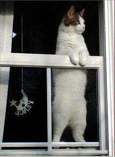 Neighbourhood watch... @Xaron White