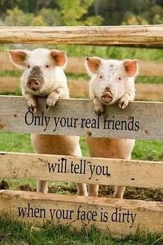 Thank God for real friends! I can always count on my real friends to tell me what I need to hear to make me a better person and to help me see things from another's point of view. Only true friends loves you enough to do that. This Little Piggy, Little Pigs, Farm Animals, Cute Animals, Wild Animals, Nature Animals, Funny Animals, Southern Sayings, Cute Pigs