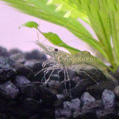 Fish Tank - 55 Gal Freshwater on Pinterest Aquarium, Fish Aquariums ...