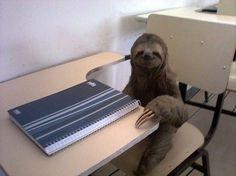 21 Ways Sloths Are Living Life Right
