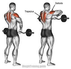 Works your lateral deltoids and traps. Can be harmful to shoulders if . Works your lateral deltoids and traps. Can be harmful to shoulders if done incorrectly. Using a narrow grip and… Fitness Workouts, Gym Workout Tips, Weight Training Workouts, Dumbbell Workout, Workout Challenge, No Equipment Workout, At Home Workouts, Workout Women, Traps Workout