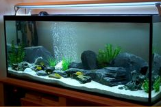 Historically saltwater aquarium owners have shied away from reefs. No one could understand why when these coral reefs were put into an aquarium the reef had a Saltwater Aquarium Setup, Goldfish Aquarium, Cichlid Aquarium, Goldfish Tank, Tropical Fish Aquarium, Nature Aquarium, Aquarium Design, Aquarium Fish Tank, Klein Aquarium