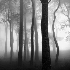 Hengki Koentjoro's Breathtaking Misty World