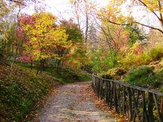 Vácrátót, az ország legnagyobb botanikus kertje Lombok, Budapest Hungary, Places To Visit, Country Roads, Explore, History, Traveling, Ideas, Viajes