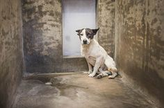 BEAUTIFUL male Heeler up for adoption now! Dogs don't need to be kept in these… Types Of Animals, Animals Of The World, Texas Animals, Animal Control, Animal Rights, Animal Rescue, Pet Adoption, The Fosters, The Help