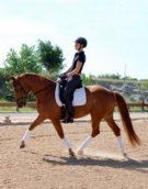 2006 Oldenburg mare schooling Third Level, ready to win at First and Second and started flying changes. Has been in professional training with Darnell Dressage since the beginning of June 2013. Sweet on the ground and Super fun to ride! $30,000