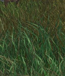 RDNA Grasslands Volume  8