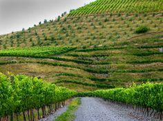 New Zealand - Wine Tasting!!
