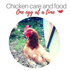 Is it hard to keep Chickens ? What To Feed Chickens, Chicken Feed, Things To Think About, Egg, This Or That Questions, People, Life, Eggs, People Illustration