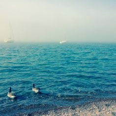 Two cute ducks on Lake Superior (one of the 5 Great Lakes) in Grand Marais, Minnesota  #vacation #inspiration #lake #lakesuperior #lakeview #blue #usa #us #minnesota #america #instablue #instablues #moodyblues #beautifulblue #beautifulblues #prettyblue #prettyblues