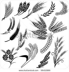 Creative wheat ears and sheafs - stock vector