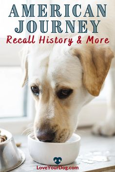 Thinking of introducing American Journey as your dog's new food? We dive in and review several different formulas across breed size, age, recipes and more. Come take a look here! #loveyourdog Dog Food Reviews, Grain Free Dog Food, Best Puppies, R Dogs, Healthy Choices, New Recipes, Your Dog, Journey, Age