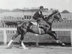 """1902 Kentucky Derby winner Alan-a-Dale in a pre-race warmup, with Hall of Fame jockey Jimmy Winkfield aboard Alan-a-Dale was a remarkably unsound colt. In order to get him into shape enough to compete in the Derby, owner/breeder Maj. Thomas Clay McDowell drove him in a buggy, which ensured he got exercised yet kept direct weight off of his back and joints. Though he won the race, Alan-a-Dale went lame in the stretch, but """"carried on with flawless courage to win by a nose"""". Thoroughbred Horse, Dressage, Kentucky Derby Race, Derby Winners, Sport Of Kings, Racehorse, Donkeys, Horse Racing, Beautiful Horses"""