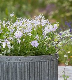 Container Gardening: Sarah Raven's 7 Tips for Perfect Flower Pots - Gardenista Container Plants, Container Gardening, Gardening Tips, Plant Delivery, Garden Drawing, Gras, Flower Boxes, Amazing Flowers, Garden Pots