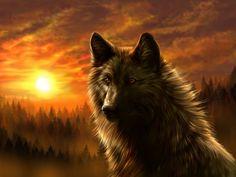Wolf bei Sonnenuntergang