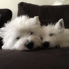 Our quiet time together! by emma_the_westie