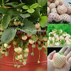"""» #SEEDS - #NEW and RARE! Pineapple flavored strawberry! """"White Alpine"""" Pi... Flower http://ebay.to/2B5CKIR"""