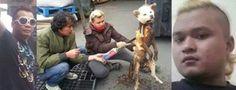 Verfolgen Sie Paar, Hund gegrillt! Urge Südkorea, aufhören zu essen unsere Haustiere! | YouSignAnimals.org