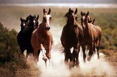 cavalos - Pesquisa Google