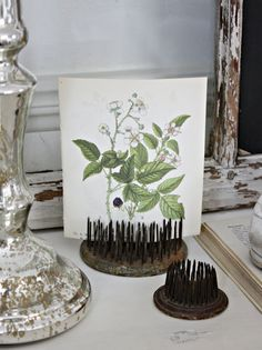 Old pin flower frogs, great for displaying pictures, etc.