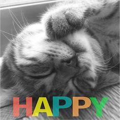 #猫の福顔祭  アイちゃん  お疲れ〜〜! チビ太の子守も大変だね (_ ..)_ バタリ  見よ!  この解放された幸せな  寝顔を(ノw`*) 明日もよろしく!  おやすみなさいませෆ̈  #福の日 #福の日祭  #猫祭 #猫 #ペコねこ部 #ねこ #きじねこ #キジ猫 #キジトラ #にゃんこ #キジ #キジトラ部 #きじとら #にゃー #mix猫 #cat #ねこ部 #neko #ふわもこ部 #かわいい #ネコ #ねこのいる生活 #愛猫 #保護猫 #にゃんだふるらいふ #ねこすたぐらむ #ニャンスタグラム #大好き