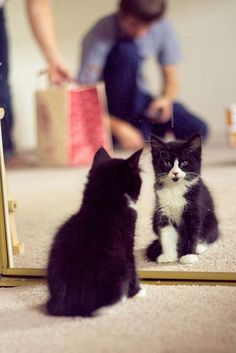 Kitten...beautiful tuxedo <3