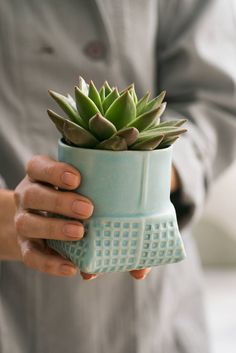 Ceramic Planter Turquoise succulent planter Light by FreeFolding Blue Plants, Blue Succulents, Potted Plants, Ceramic Flower Pots, Ceramic Planters, Planter Pots, Modern Planters, Indoor Planters, Indoor Gardening