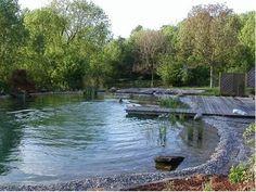 Natural Swimming Pool SITIOSOLAR - Las piscinas naturales Swimming Pool Pond, Natural Swimming Ponds, Natural Pond, Pond Landscaping, Ponds Backyard, Fish Ponds, Dream Pools, Saunas, Cool Pools