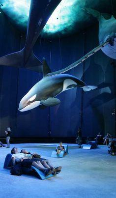Fish Stories: 7 More Amazing Public Aquariums | WebEcoist