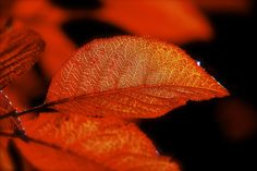 Fall Colors.. by Sushanth  on 500px
