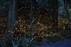 Long exposure images of fireflies. Just wow. (Thanks, Hannah, for posting on twitter!)