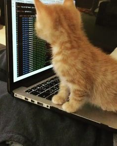 The new IT guy is pretty young but he knows his stuff http://ift.tt/2p7hlYD