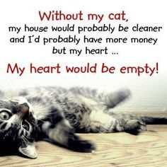 loving cats quotes - Google Search