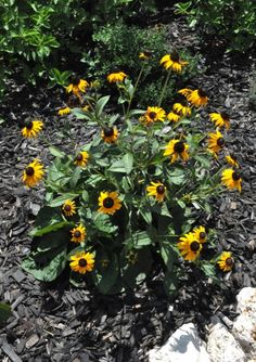 Flowering Plants for Texas. A list with pictures and details.