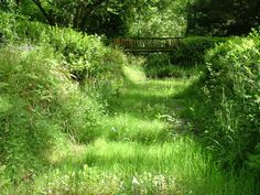 huntington castle inspiration for meadow walk to stream