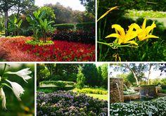 What's in Bloom, July 25, Dallas Arboretum, Garden, Flowers, Blooms