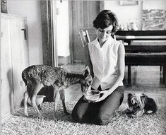 Audrey Hepburn with her pet fawn Pippen and her dog Mr. Famous - 1958