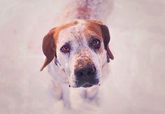 ❤️ my redtick hound!